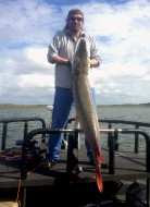 Another Big Alligator Gar!